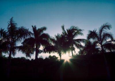 chrisreed-landscapes-13